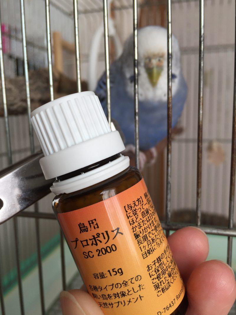 鳥用プロポリス